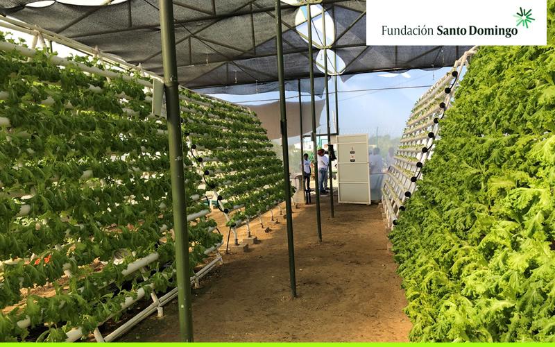 Agricultores Urbanos en Ciudad del Bicentenario
