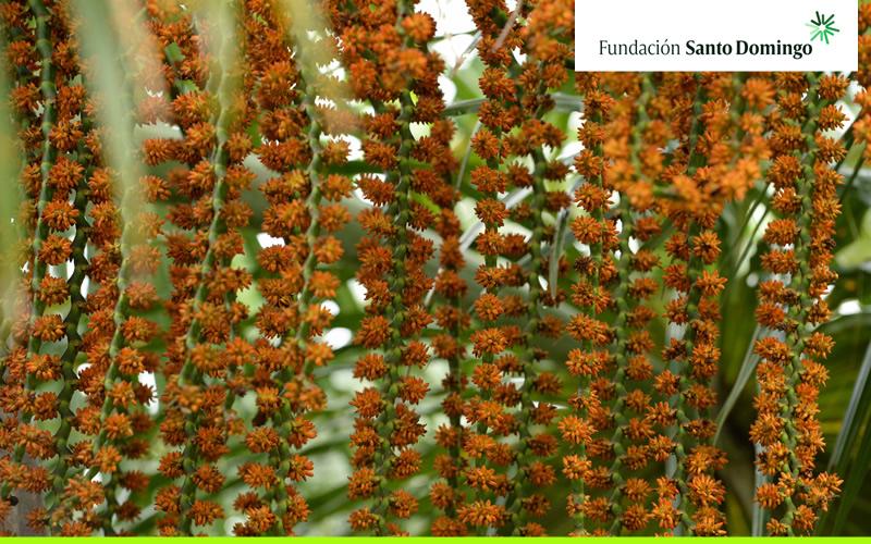 La Fundación Mario Santo Domingo apoya la preservación de 15 especies de flora y fauna